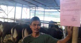 Salah seorang pedagang hewan kurban, Hamid saat menunjukan surat keterangan yang dikeluarkan Pemerintah Kabupaten Bekasi mengenai hasil pemeriksaan kesehatan hewan kurban yang dijualnya, Minggu (19/08) kemarin.